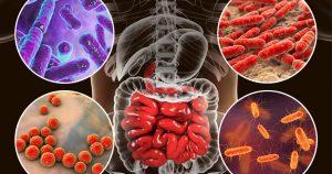 Microbiota y sistema inmune